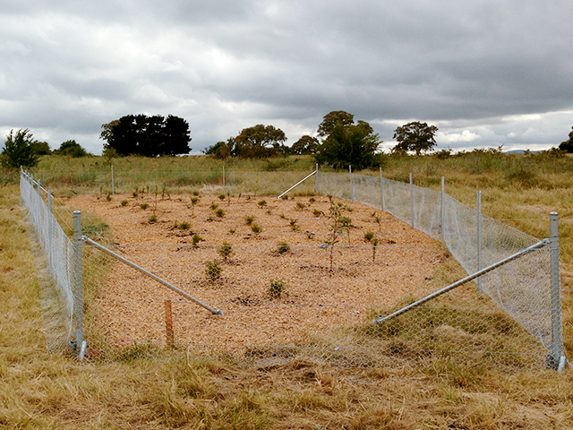 Plantation Fencing, Lyndarum